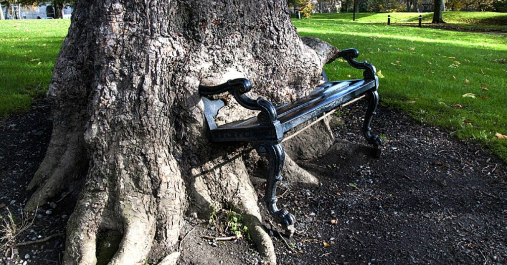 The Hungry Tree eating a park bench in Dublin, Ireland