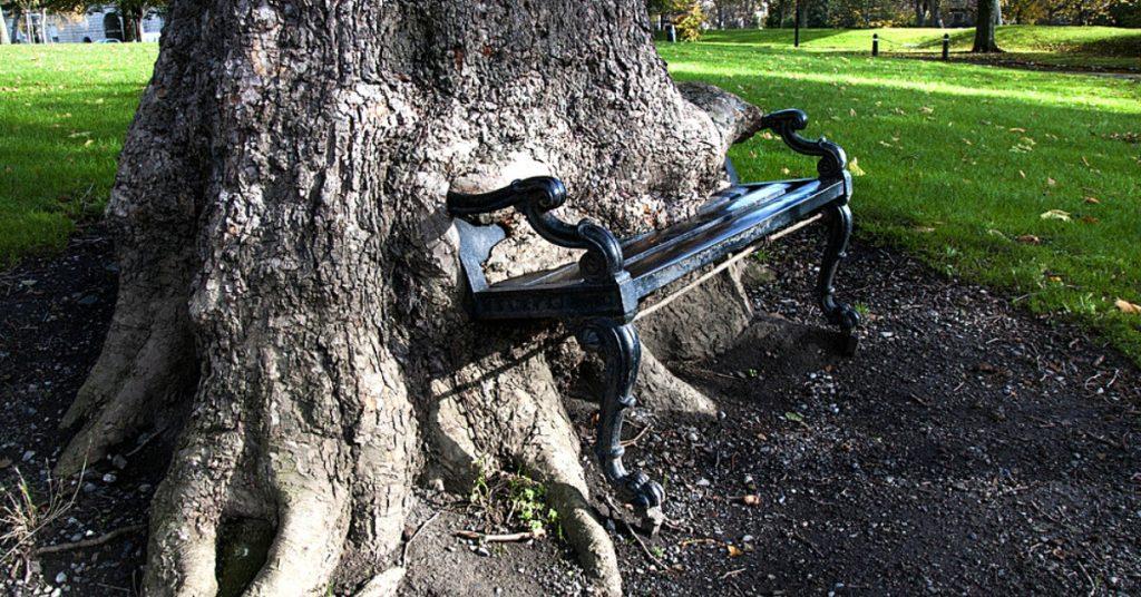 Der Hungrige Baum isst eine Parkbank in Dublin