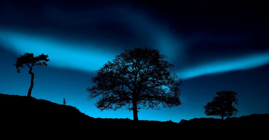 Northern Lights and trees