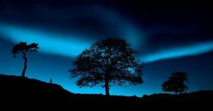 Polarlichter und Bäume