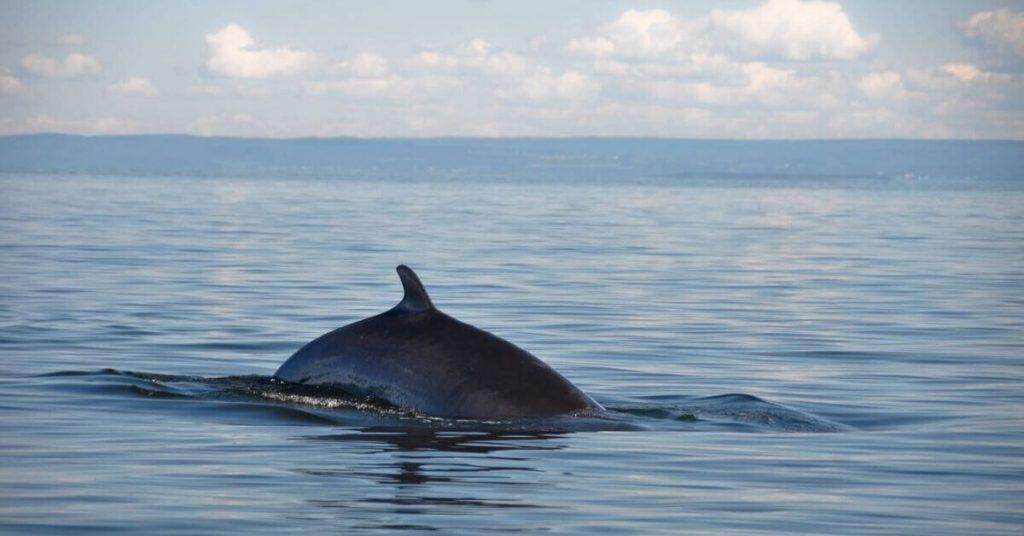 A close encounter with a minke whale.