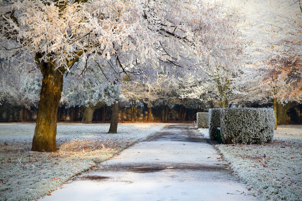 Frosty Park in Limerick, Ireland