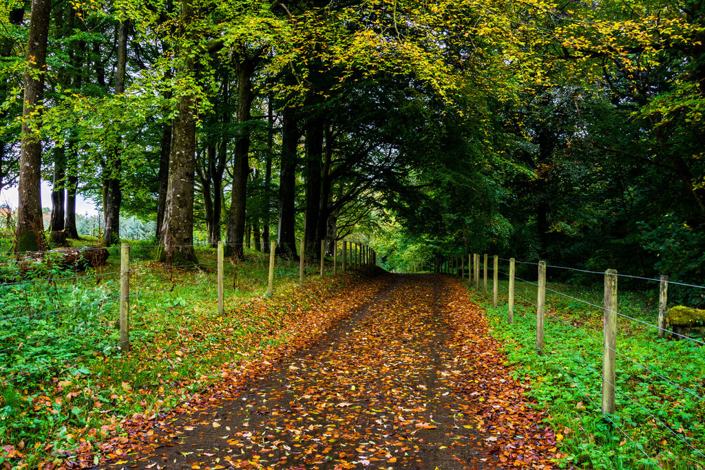 A roadway in Ireland covered in autumn leaves.