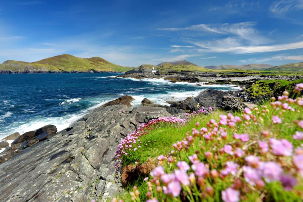 South of Ireland beautiful coast with flowers