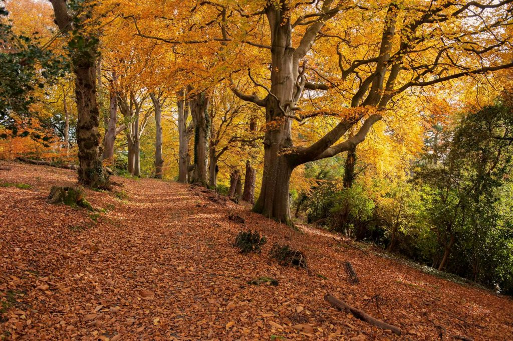 A leafy pathway in Mount Stewart, County Down, Northern Ireland.