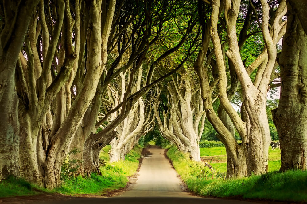 Dark Hedges, Northern Ireland.