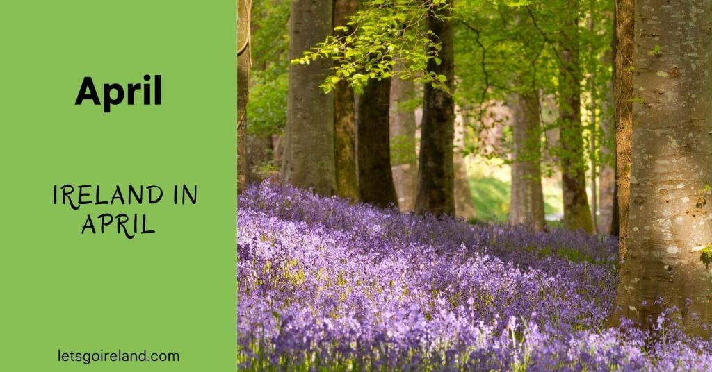 Ireland in April Feature Image with Bluebells.